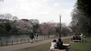 市川市 じゅん菜池公園 花見 桜